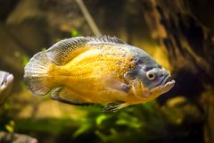 Colorful fish in aquarium. Colorful fish - Kolobrzeg aquarium tank Royalty Free Stock Image