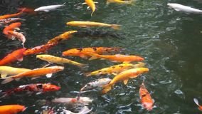Colorful fish stock video
