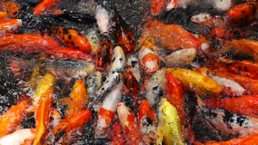 Colorful fish stock footage