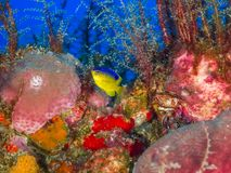 Fish and marine life on Oil Rig royalty free stock photos