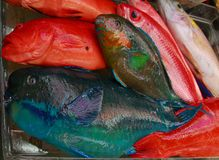 Colorful fish at market. Red green and blue saltwater fish at a market in Okinawa Stock Image