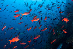 Colorful Fish Near Rocky Reef Stock Photos