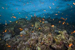 Colorful fish and reef. Colorful fish and coral reef underwater Stock Photos