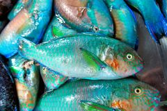 Colorful fish for sale in the public market. Royalty Free Stock Image