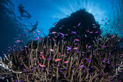 Colorful Fish and Snorkelers Royalty Free Stock Photography