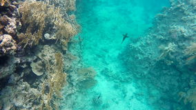 Colorful fish swim in the clear water. Red sea stock video footage