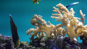 Colorful fish swimming close coral reef in blue water, peaceful view. UHD 4K stock video