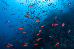 Colorful Fish Swimming Near Rocky Reef stock photo