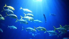 Colorful fish swimming stock footage