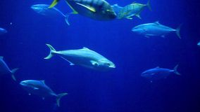 Colorful fish swimming stock video footage