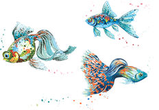 Colorful fish. Vector illustration of three colorful fish isolated on white background Stock Photo