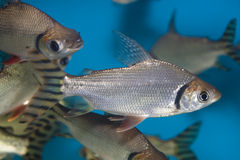 colorful fish tropical стоковое изображение rf
