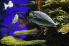 Free Colorful Fish - Tropical Reef Tank At Toronto Aquarium Royalty Free Stock Photos - 40896838