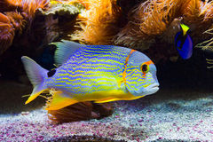 Colorful fish Stock Image