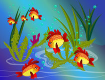 Colorful fish under the sea Royalty Free Stock Images
