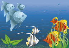 Colorful fish under water.  Royalty Free Stock Image