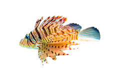 Colorful fish. Under water have many kind of animal,The fish is one Stock Photography