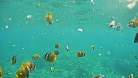 Colorful Fish Underwater Reef Coral Indonesia Tropic Slowmotion stock footage