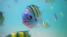 Colorful fish underwater stock video footage