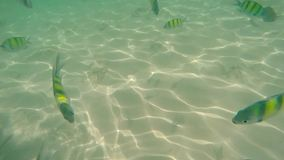 Colorful fish underwater, Tropical water in thailand Phuket - Andaman sea stock footage