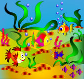 The Colorful fishes Stock Photography