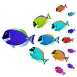 Colorful fishes. School of Colorful Tropical Fishes royalty free stock image