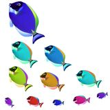 Colorful fishes Stock Image