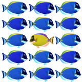 Colorful fishes. School of Colorful Tropical Fishes stock images
