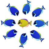 Colorful fishes Stock Photography