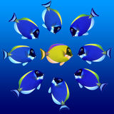 Colorful fishes. School of Colorful Tropical Fishes stock image