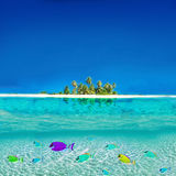 Colorful Fishes. Colorful Tropical Fishes swimming in the Caribbean royalty free stock photos