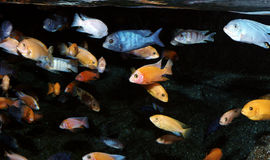 Colorful fishes Stock Photo