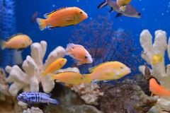 Colorful Fishes Royalty Free Stock Photos