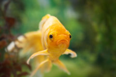 Colorful fishes in aquarium Royalty Free Stock Photography