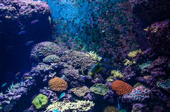Colorful fishes and corals. In the aquarium Stock Images