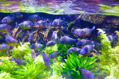 Colorful Fishes in green - Underwater life Stock Photo