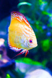 Colorful Fishes in green - Underwater life Royalty Free Stock Photos