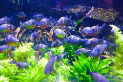 Colorful Fishes in green - Underwater life Royalty Free Stock Photo