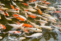 Colorful fishes swimming. Stock Photos