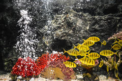 Colorful fishes swimming in aquarium Royalty Free Stock Photos