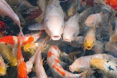 Colorful fishes in transparent water Stock Photo