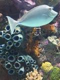 Beautiful pastel tropical fish. Colorful fishtank display at aquarium royalty free stock photos