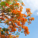 Colorful flame tree Stock Image