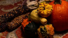 Colorful flint corn, golden, bumpy gourds, colorful squash, and a pumpkin lie on a table during Thanksgiving. This photograph would be ideal for fall, autumn stock image