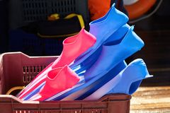 Colorful flippers in the box. Diving and snorkeling accessories royalty free stock image