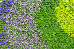Colorful floral background which color gradation ripple. The curve line of flower and plant in the garden transforming from  violet, pink, green and light Stock Photos