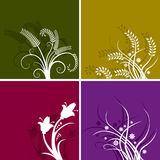 Colorful floral backgrounds. Set of four colorful floral backgrounds Royalty Free Stock Image