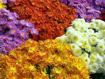 Colorful floral bed. Mother Nature gives bounties. She showers onto us her blessings copiously. Trees, flowers, various flora and fauna not only add color to our Stock Photos