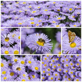 Colorful Floral Collage Royalty Free Stock Photo