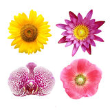 Colorful floral collage lotus; orchid; sunflower; hollyhock Stock Image